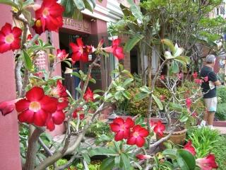 Chiangmai4
